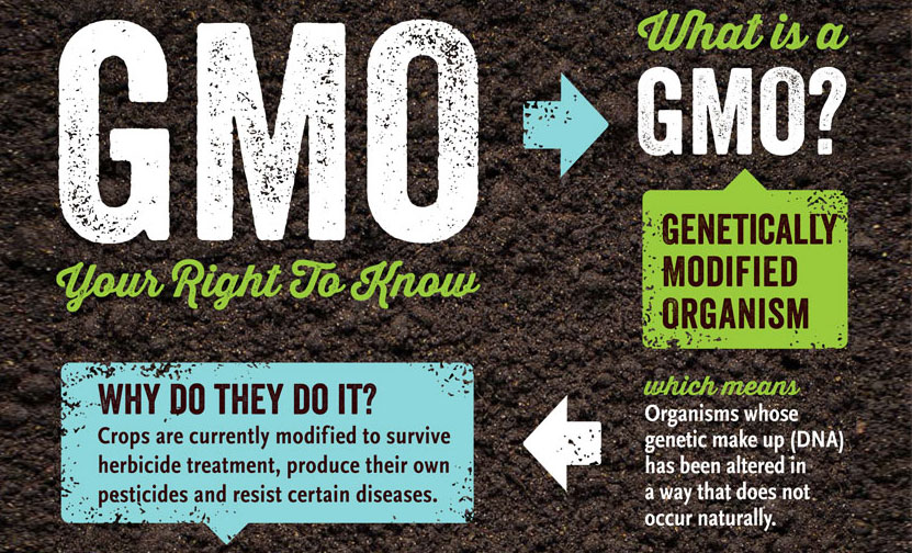 What is a GMO? | Tasty Recipes